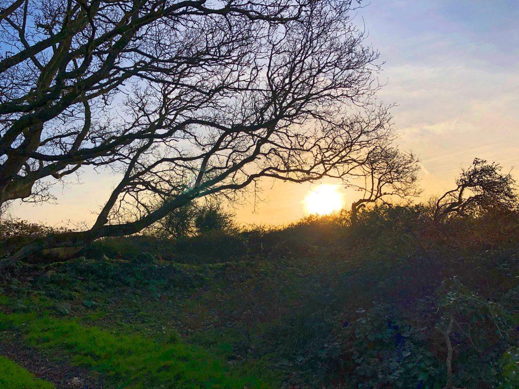 Le Printemps avant l'heure Coucher de soleil