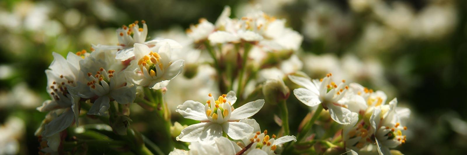Le printemps est arrivé Bannière