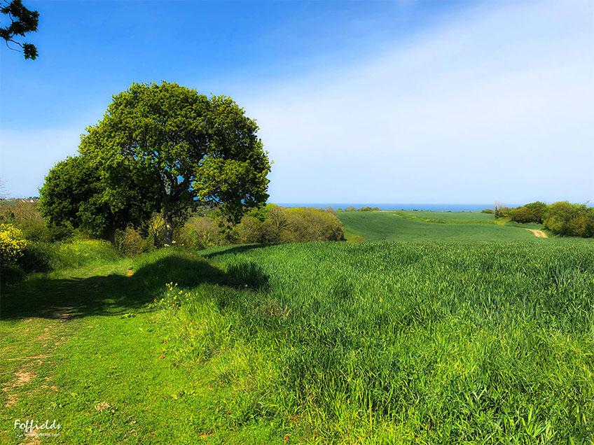 La nature bretonne au printemps