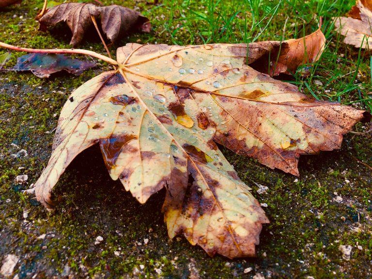 6-Couleurs d'automne