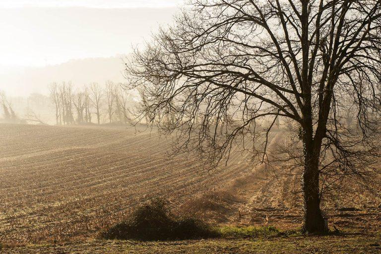 03 - Paysages dans la brume en automne