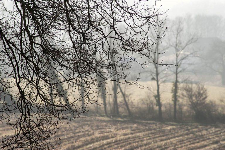 08 - Paysages dans la brume en automne