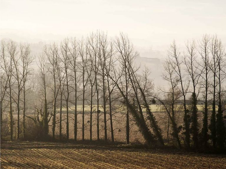 Paysages dans la brume